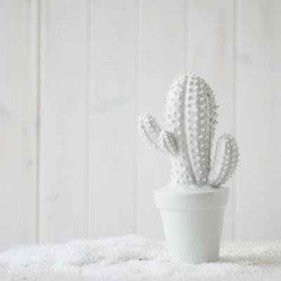 Cactus hucha