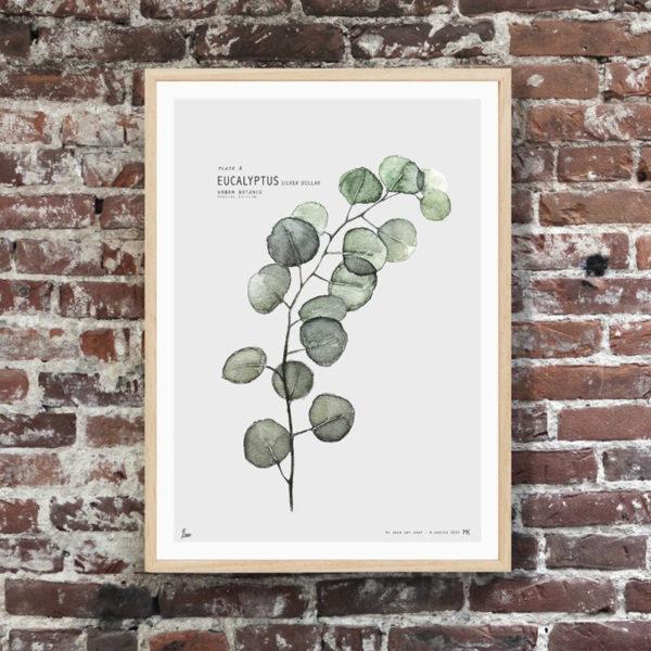 Lámina - Eucalyptus