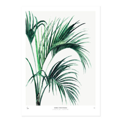 Lámina Howea - botánica - greenery - Liderlamp (1)