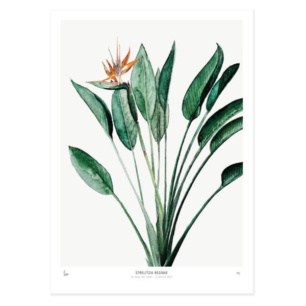 Lámina Strelitzia – botanica – greenery – Liderlamp (1)