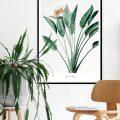 Lámina Strelitzia – botanica – greenery – Liderlamp (2)