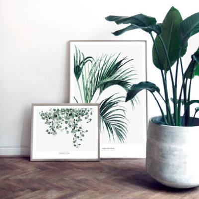 Lámina botánica – Meuhlenbeckia – enredadera – tendencia tropical – Liderlamp (1)