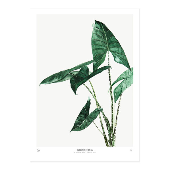Lamina Alocasia – botanica – plantas – greenery – Liderlamp (1)
