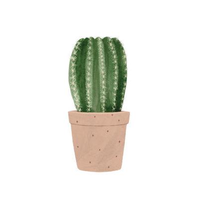 Lámina vegetal - cactus redondo - Hermano Gato - Liderlamp