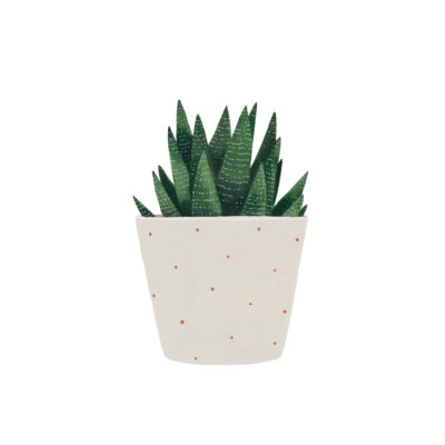 Lámina vegetal - suculenta - Hermano Gato - Liderlamp