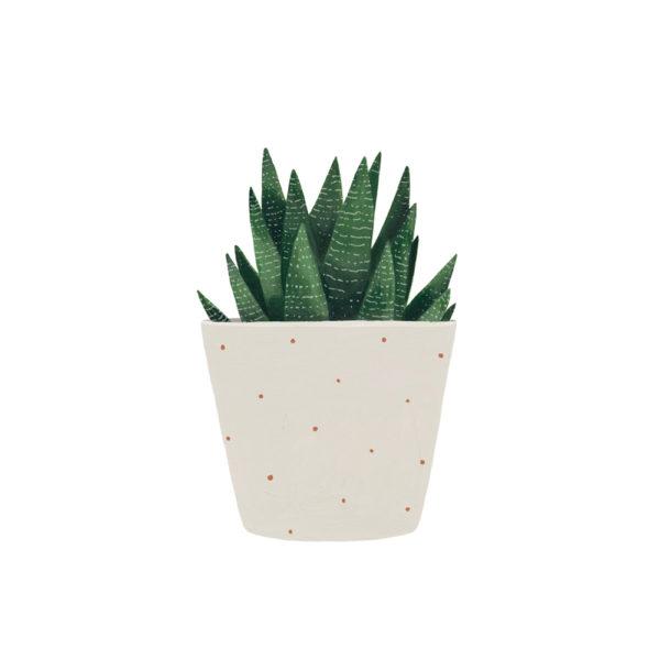 Lámina vegetal – suculenta – Hermano Gato – Liderlamp