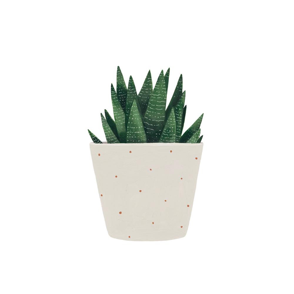 L mina suculenta bot nica vegetal hermano gato for Laminas de plastico para paredes