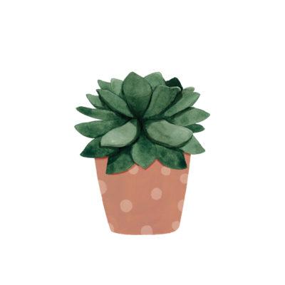 Lámina vegetal - suculenta topos - Hermano Gato - Liderlamp