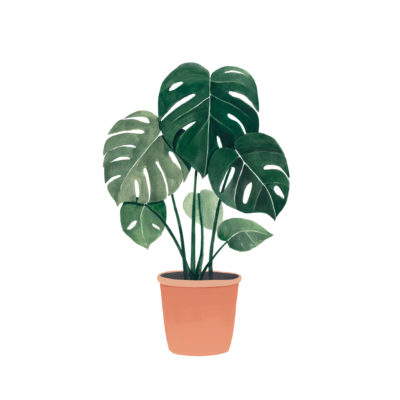Lámina Monstera - botánica - Hermano Gato - Liderlamp