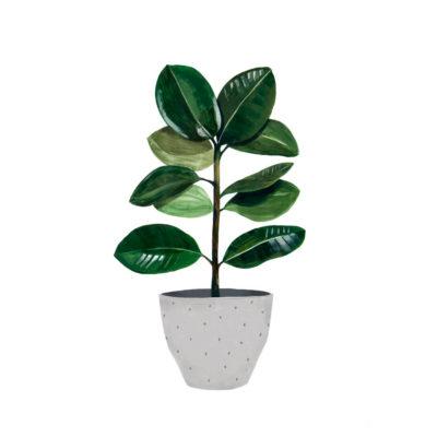 Lamina Ficus - botanica - Hermano Gato - Liderlamp
