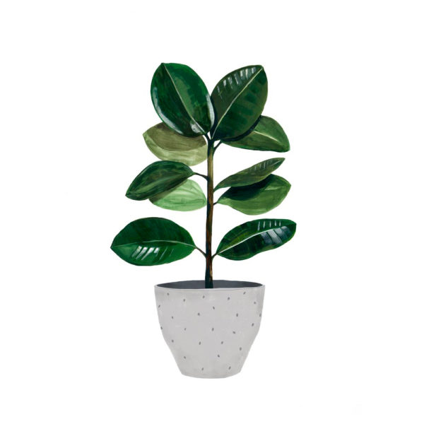 Lamina Ficus – botanica – Hermano Gato – Liderlamp