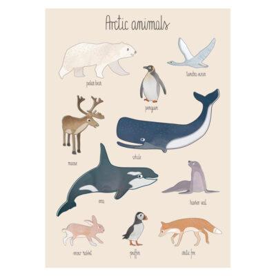 Lamina Arctic Animals - animales - ilustracion - habitacion ninos - Liderlamp (1)