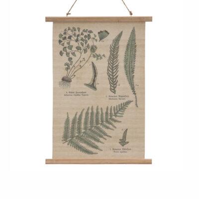 Pergamino Helecho - lamina - decoracion pared - poster - botanica - Liderlamp (1)
